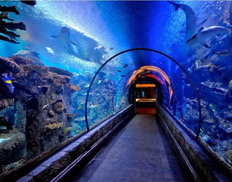 Shedd Aquarium Package