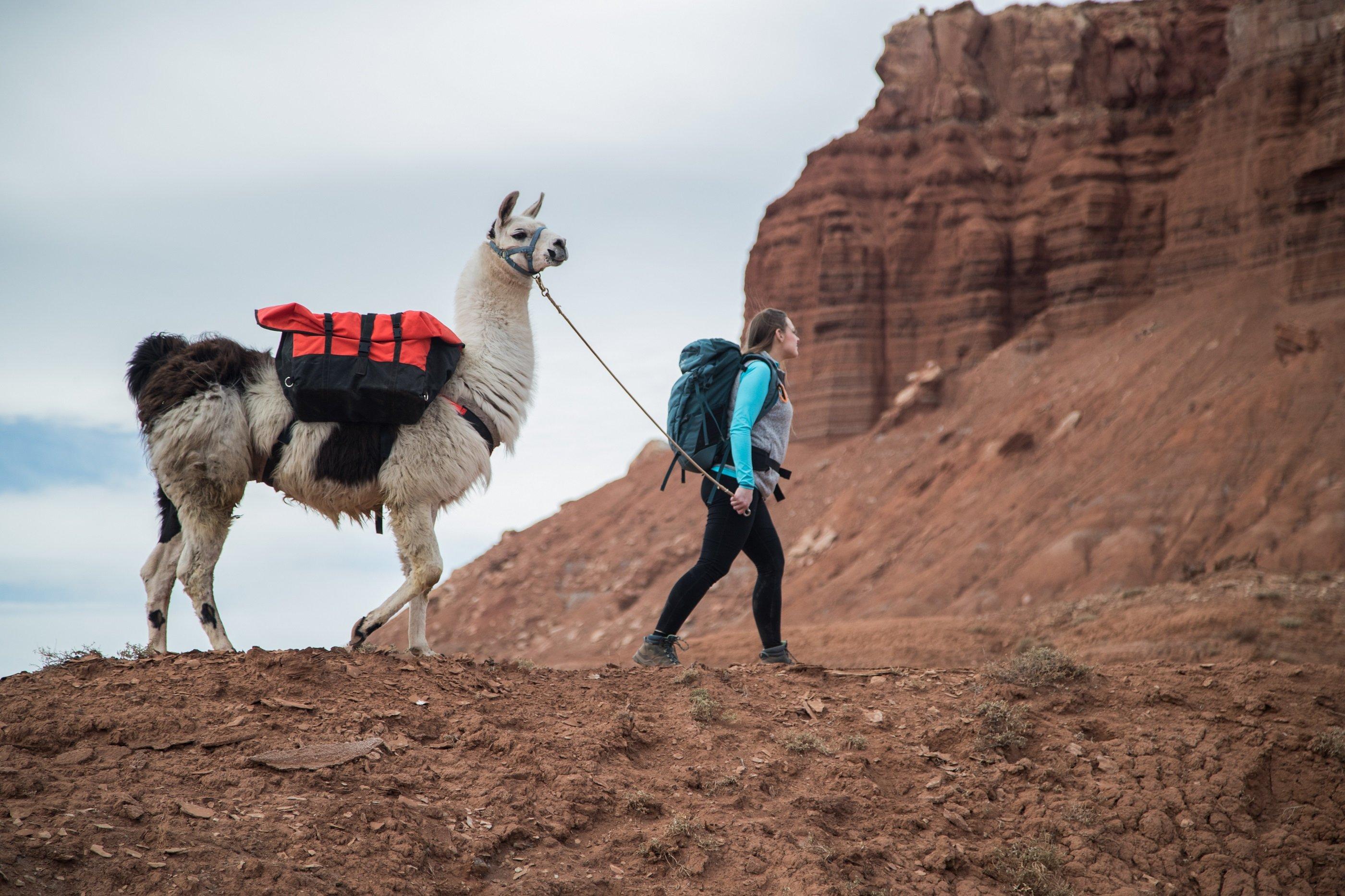 Llama Hike + Breakfast Package