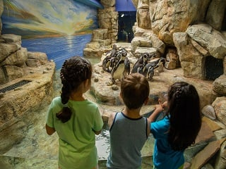 Explore Moody Gardens Package For Four