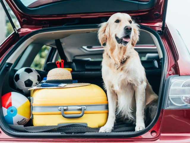 Pawsitively Pet-Friendly Package