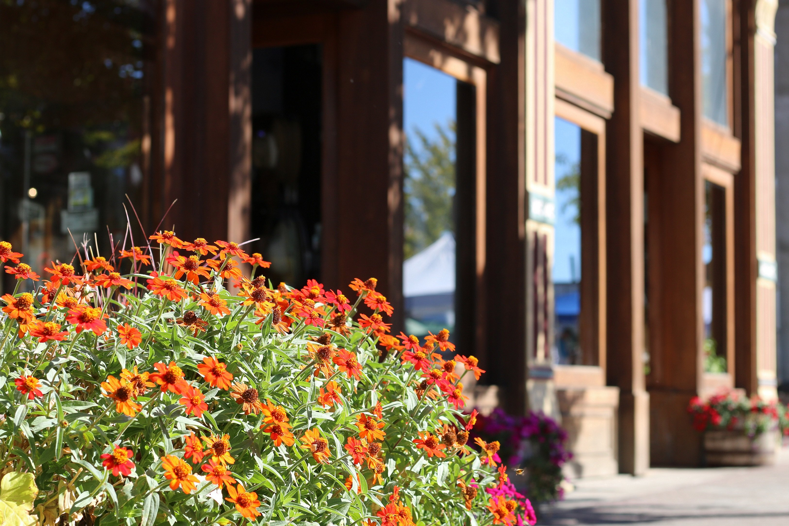 Sow Your Springtime Savings at Hotel Windrow