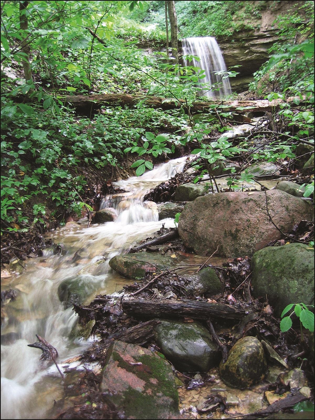 Scenic Picnic Excursion