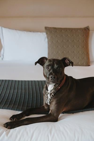 Unrivaled HosPAWtality - Pet Package
